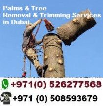 Palm and Trees Maintenance Services in Dubai @0526277568