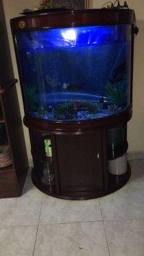 Curved Aquarium
