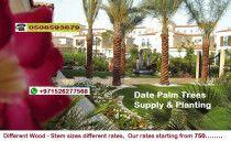 Garden + Irrigation+ Grass + Services in Dubai 0526277568