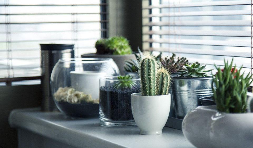 Indoor Plants and Pots Service Abu Dhabi